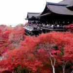 紅葉が美しいパワースポット!in清水寺!