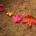 景色も楽しみパワーももらおう!秋こそ行きたい紅葉がキレイなパワースポット