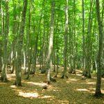 【パワースポット】美しすぎる林で身も心も清浄!【新潟県,十日町市,美人林】