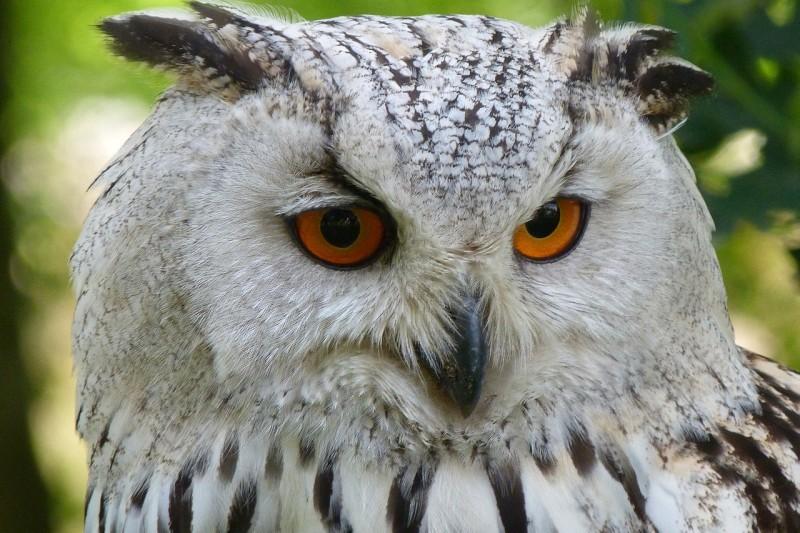 owl-62703_1280