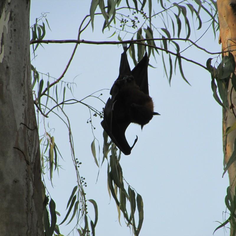 bats-300861_1280
