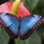 美しくなりたい!変化したい!そんな時の開運アニマル「蝶」