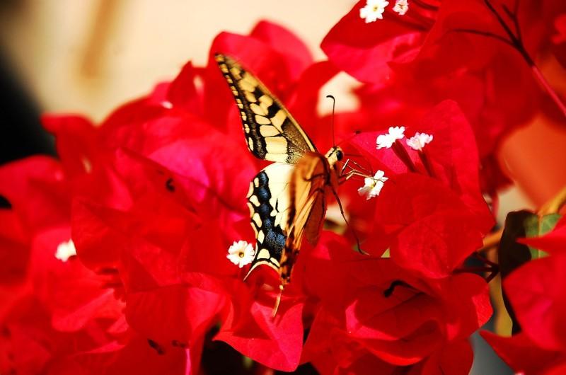 butterfly-745776_1280