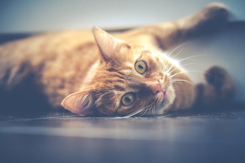 cat-1044914_1280