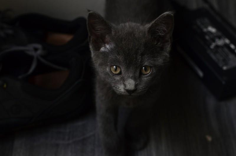 cat-426394_1280