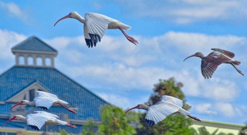 cranes-499195_1280