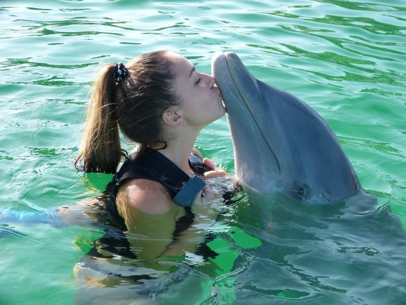 dolphin-955749_1280
