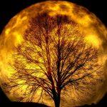 【開運】満月エネルギーで幸せ満タン!満月のおまじない