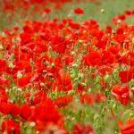 【開運】カラーシリーズ*赤のパワーを使った幸せの法則