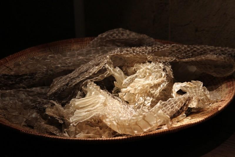 rattlesnake-989138_1280