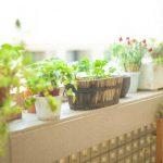 観葉植物、ただ見た目だけで選んでませんか?風水的幸運と言われている観葉植物を紹介します。