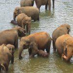 世界中で幸運の使いとされる動物「象」のパワーで運気アップ