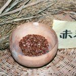 いつものお米よりも神聖なパワーが強い「古代米」をご存知ですか?