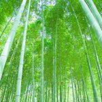 日本では古来から神聖な「竹」の持つ霊的パワーとは