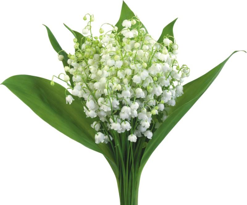 flower3968
