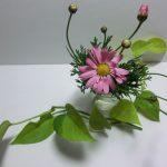 運気を上げてくれるパワー観葉植物「ポトス」を自宅で育てよう