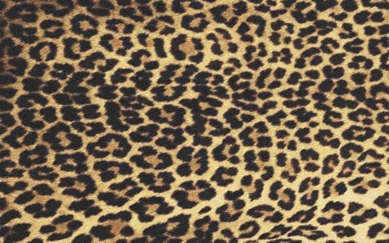 leopard012