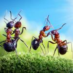 【夢占い・開運・吉夢】蟻が幸せを運ぶ!蟻が出てくる夢とは?