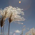 【夢占い・開運】風に関する夢の意味とは?【吉夢・警告夢】