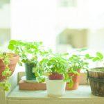 【金運】運気アップに本当に役立つ、観葉植物の選び方とは。