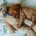 【夢占い】犬が出てくる夢の意味・2【開運】