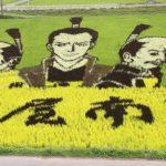 【開運】休日は「田んぼアート」を見に行こう!特別なチカラを持つ稲穂が実る田んぼは身近にある最高のパワースポット