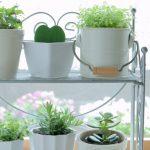 【金運UP】観葉植物の置き方・選び方とは?【風水】