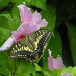 【風水・動物】♪ラッキーモチーフ・蝶&ウサギで運気アップ♪