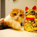 【金運】「招き猫」のご利益のある置き場はどこ?