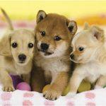 犬を家族にして人生に開運アップ(*´ω`*)