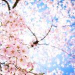 春を感じる♥見た目もかわいい『桜スイーツ』で家庭運、恋愛運アップ