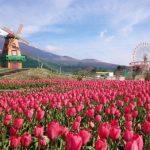 静岡「天空のチューリップ祭り」で全体運を意識しましょう。