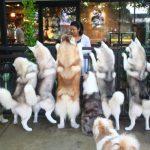 タイの「ドッグカフェ」が凄い!対人運へ