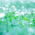 【夢占い】夢に花などの植物が出てきたらいったいどんな意味を持つの?