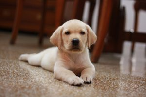 【夢占い】夢に犬が出てきた!犬の夢を見る意味とは?