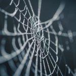 【夢占い】夢に蜘蛛が出てきた!クモの巣の夢の意味とは?