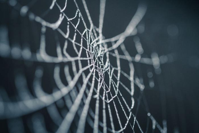 【夢占い】夢に蜘蛛が出てきた!蜘蛛の巣やクモの夢の意味とは?