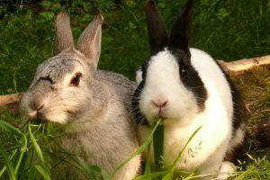 〈恋愛運・社交運・仕事運〉嬉しい事尽くしの「ウサギ」で運気アップ!