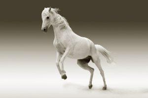 〈人気運・商売繁盛・幸福を運ぶ〉馬の縁起と開運力とは?!