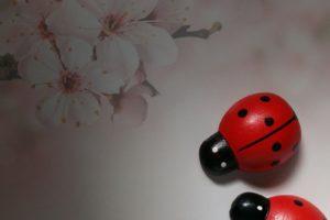世界中で愛されている「てんとう虫」がラッキーを運ぶ?!
