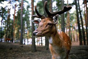 「鹿」は財運アップの助っ人!鹿にまつわる縁起のアレコレ