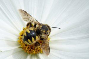 """ハイブランド""""GUCCI""""も注目!〈繁栄・金運の上昇・幸せ〉の象徴「蜂」の開運力"""