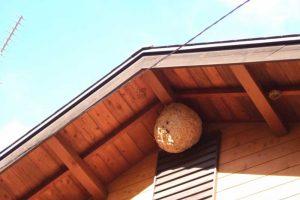 玄関先にスズメバチの巣を飾ると縁起がいいと言われているのはなぜでしょう。